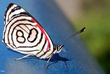 Amo borboletas! / I love butterflies!
