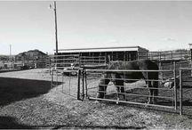 horse/Barn