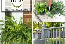 Container Gardening / Gardening Tips and Ideas For Container Gardening