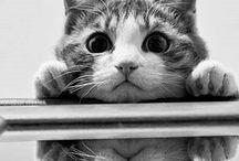 Cat  macska