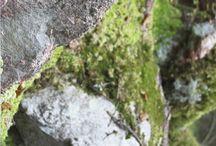 Kivikot