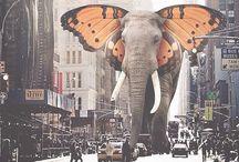 Butterphant / :)