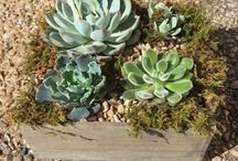 Plants and dish gardens