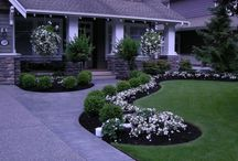 Front Yard renovations / by Mary Myzia