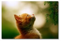 animali / il fantastico mondo degli animali