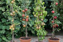 Drzewka owocowe