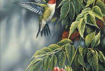 NATURA_ptaki