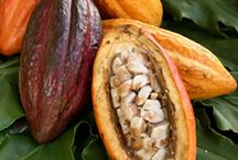 Cacao: Our Roots