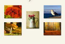 Mein Bildershop