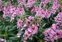 S -- Flowers