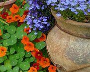 Container gardening (Konténer kertészkedés)