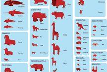 Mammals for Kids / Mammal Unit #mammals #animals #classroom #carpettime #circletime #crafts #education #prek #preschool #daycare #kinder #kindergarten #kids #howtoteachkids #lessonplan #parents #childcare #tfa #educator #ece #earlychildhood #curriculum #teaching #teacher