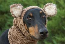 σκουφάκια για σκυλάκια