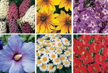 Garden plant ideas