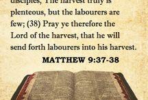 Gospel According to Matthew / Bible Verses from the Gospel According to Matthew