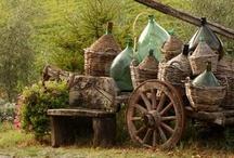the vineyard / by Chris Holst