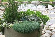 Container Garden Ideas / Inspiration for container gardening ideas