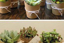Plantas con su matero
