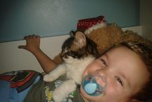 Crazy cats / Cute and funny pictures of my cats and a few with my two children. Hope they make you smile :)