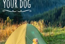Camping with Pets—Woof Woof! / Camping is more fun with the whole family!