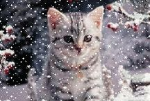 Kitty in the snow