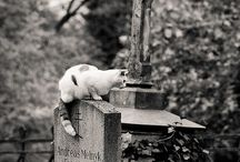 Cemeteries & Tombstones / by Shelly Cloud