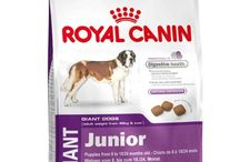 ROYAL CANIN GIANT JUNIOR, 4 KG