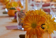 PARTY: wedding ideas / by Theresa Rhodes Bassemier