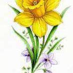 kwiat zonkil