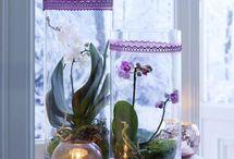 Orchids forever / Die schönsten Deko-Ideen mit Orchideen
