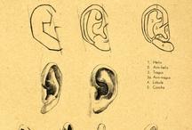 ears / by Elisabeth Doherty