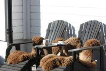Buitenleven vachten schapenvachten / Schapenvachten kunnen een prachtige uitstraling geven aan uw terras bovendien zijn ze lekker warm. Gaat u kamperen en is het nog koud gebruik dan een schapenvacht of lamsvacht in uw tent of slaapzak.