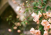 Flowering Fences