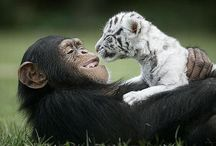 Photography - Animals / by Christine Frawley Hill