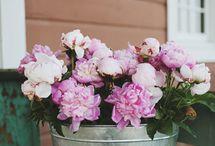 déco de fleurs