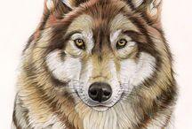 He, Wolf