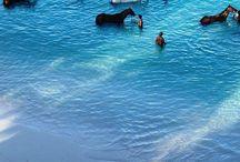 Barbados 2019