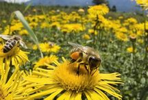 Environment / gmo, bees, environment, ecology, climate change