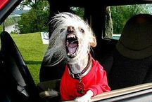 Pets in the car / by Longwood Vet Clinic
