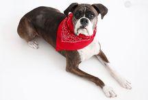 FLEA COLLARS FOR PETS