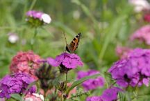 Summer Flowers / What is flowering on our site in South Gloucestershire, UK, from June to August