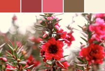 colours coordinating