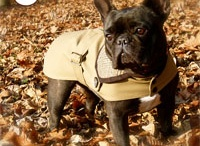 Morada, the stylish Frenchie :-) / Morada is the testimonial of the INAMORADA brand