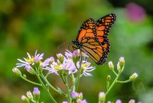 Nature Pictures / Nature Pictures of animals, insects, birds and flowers