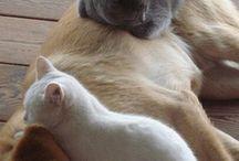 Pretty animals / Adoro gli animali! Soprattutto i gatti