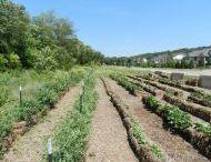 GARDEN: Straw bale-garden