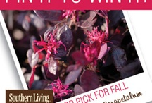 Pin It to Win it WINNER BOARD / by Southern Living Plant Collection