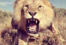 Majestic Animals