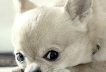 Dog Quotes / Adorable, cute quotes  about dogs and puppies, to melt your heart ❤