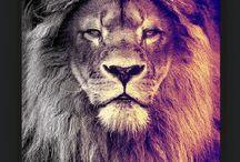 Egy oroszlán sosem adja fel.